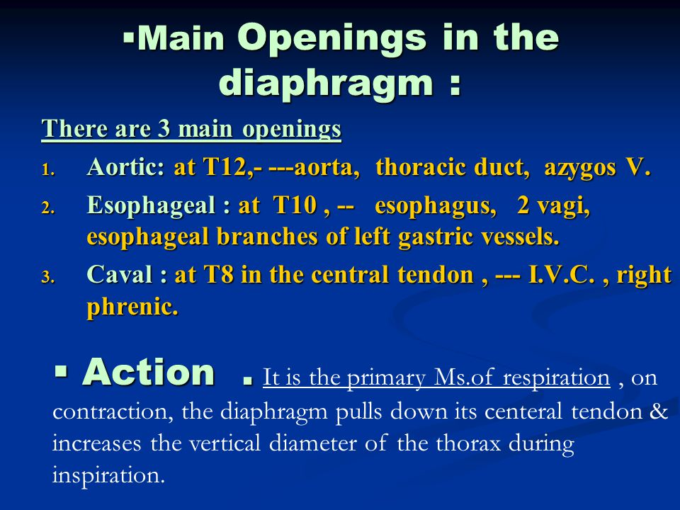 Main Openings in the diaphragm :