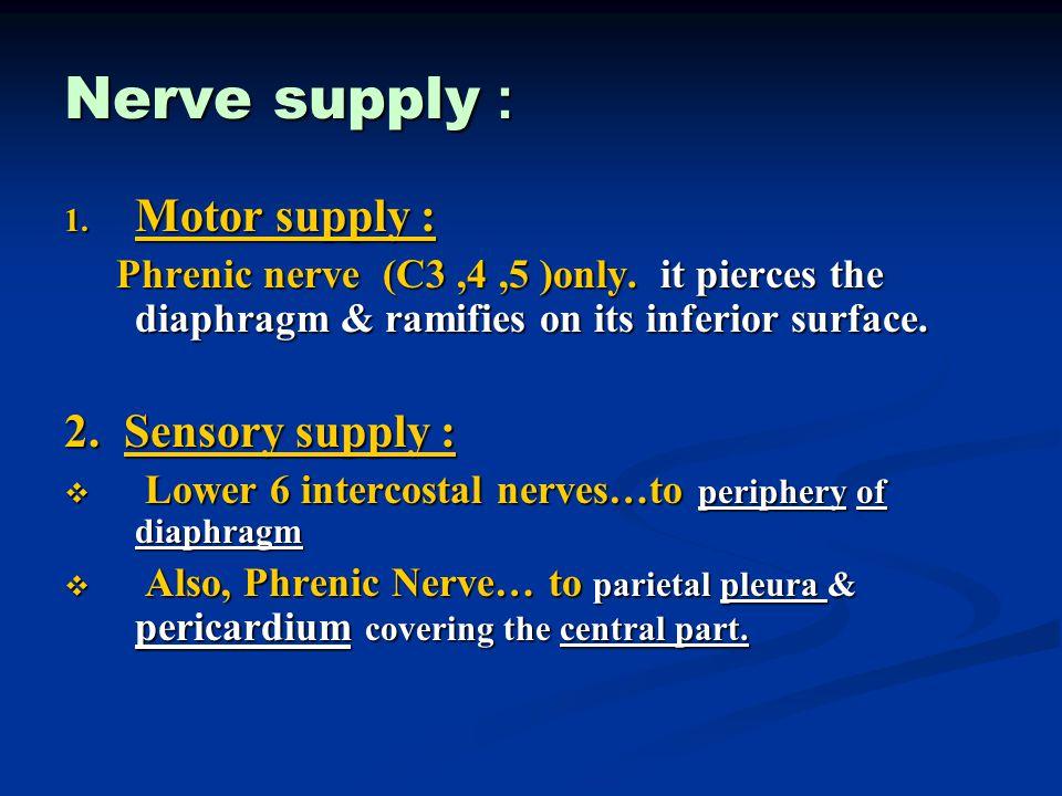 Nerve supply : Motor supply : 2. Sensory supply :