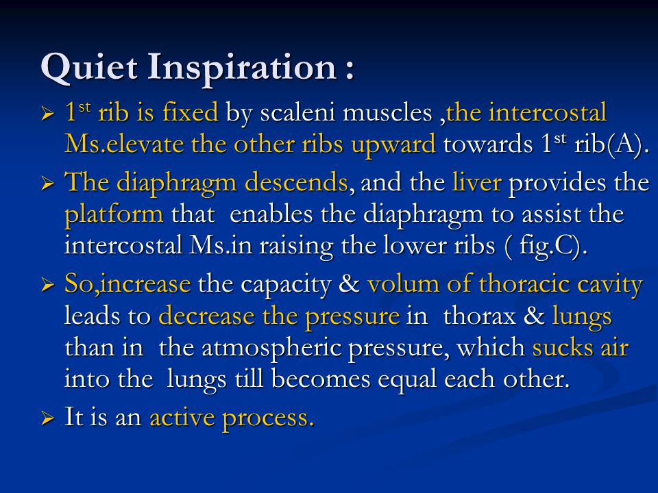 Quiet Inspiration : 1st rib is fixed by scaleni muscles ,the intercostal Ms.elevate the other ribs upward towards 1st rib(A).