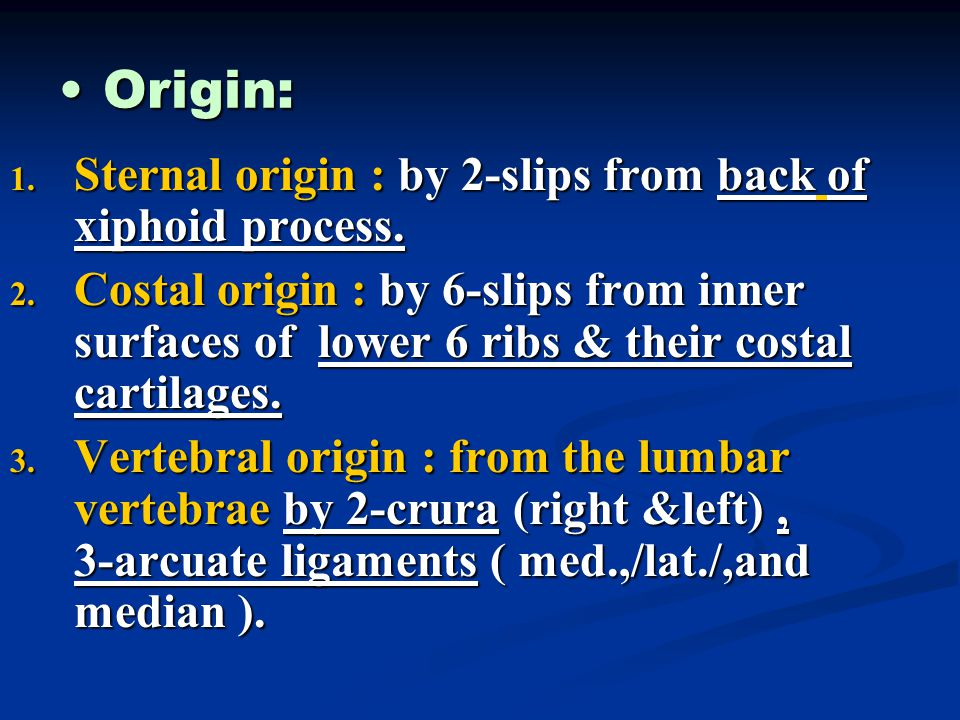 Origin: Sternal origin : by 2-slips from back of xiphoid process.