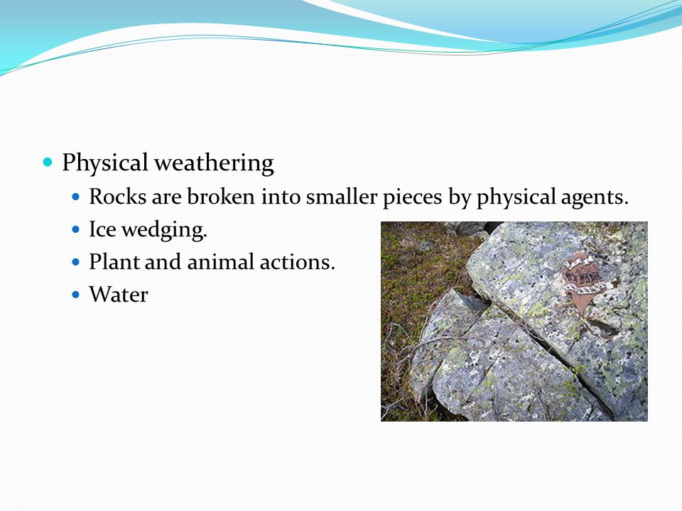 Physical weathering Rocks are broken into smaller pieces by physical agents. Ice wedging. Plant and animal actions.