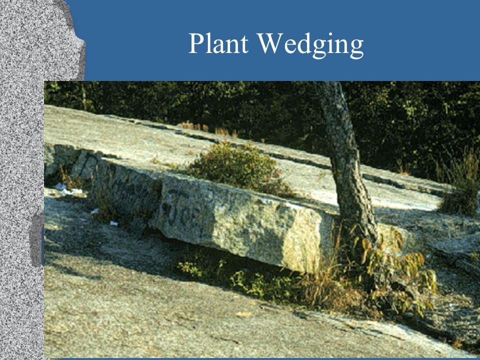 Plant Wedging