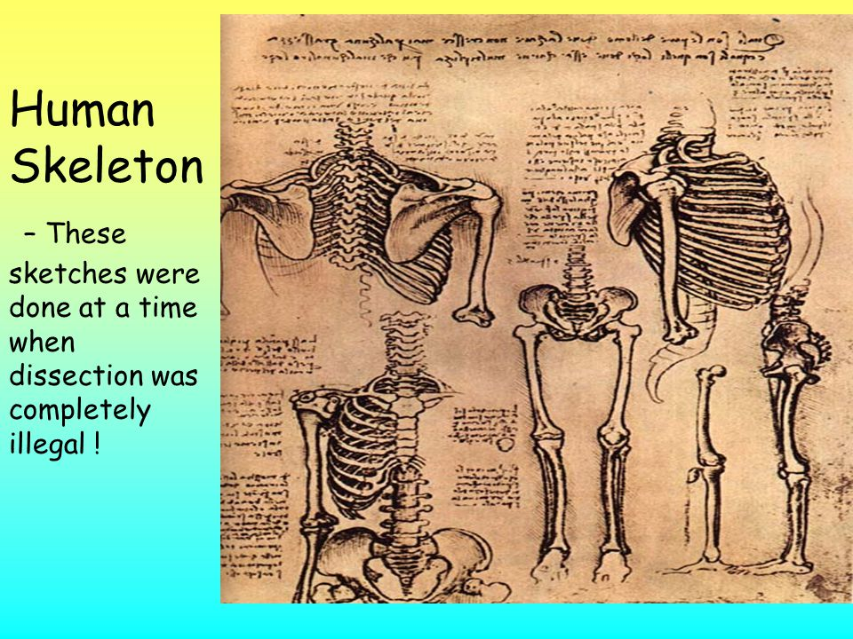 Human Skeleton – These sketches were done at a time when dissection was completely illegal !
