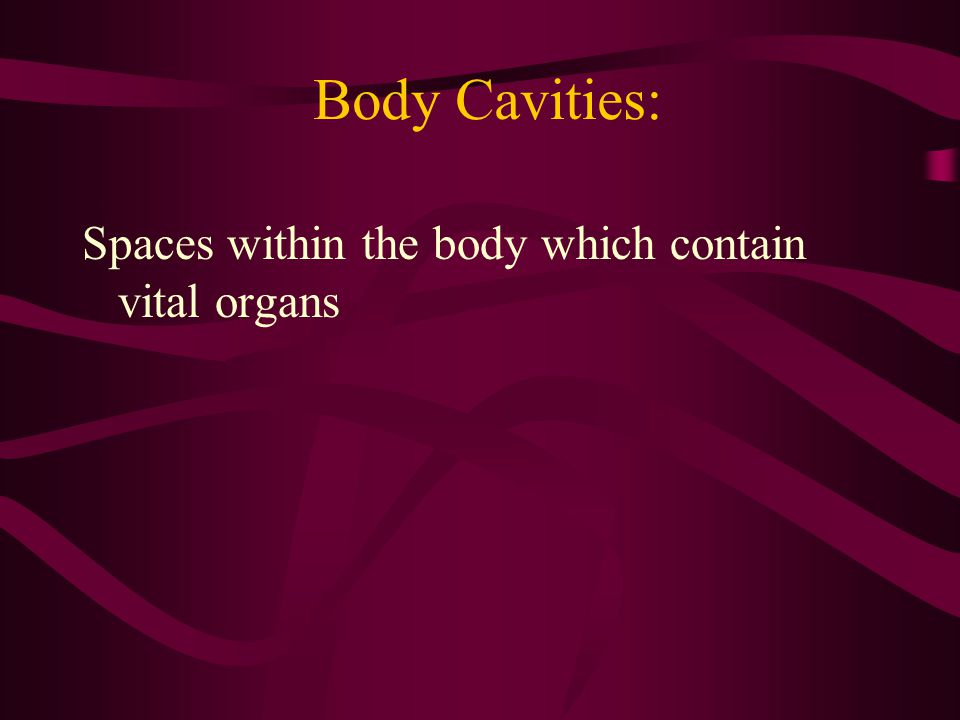 Body Cavities: Spaces within the body which contain vital organs
