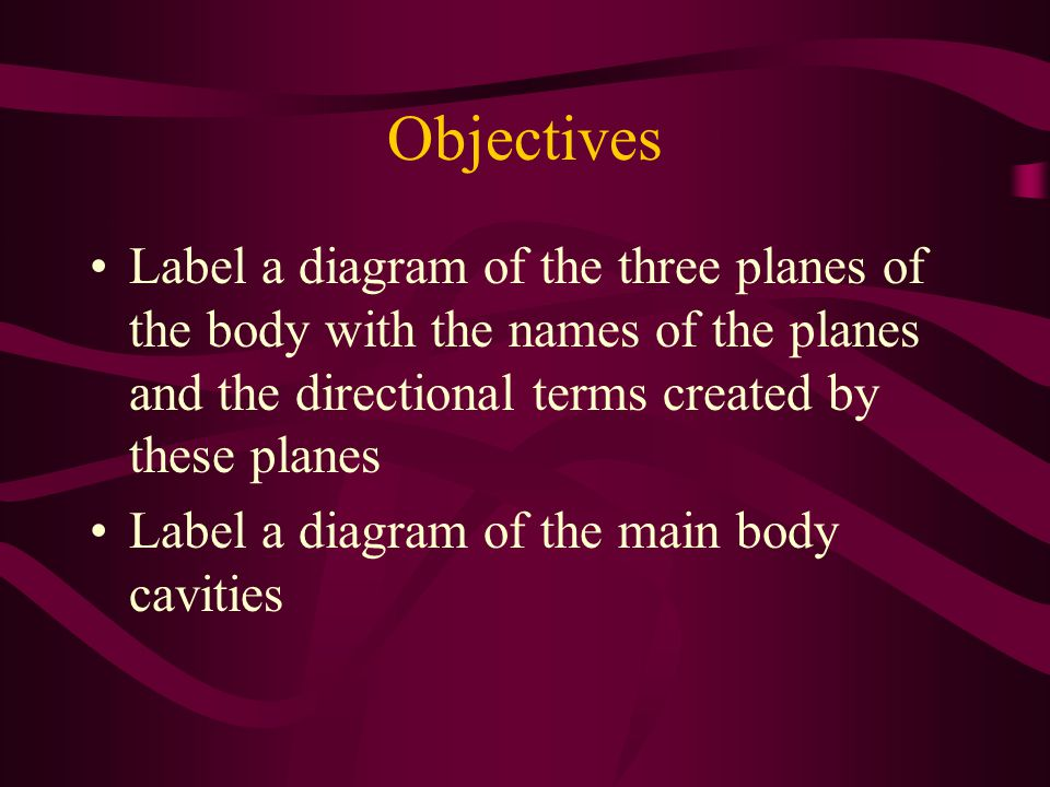 Objectives Label a diagram of the three planes of the body with the names of the planes and the directional terms created by these planes.
