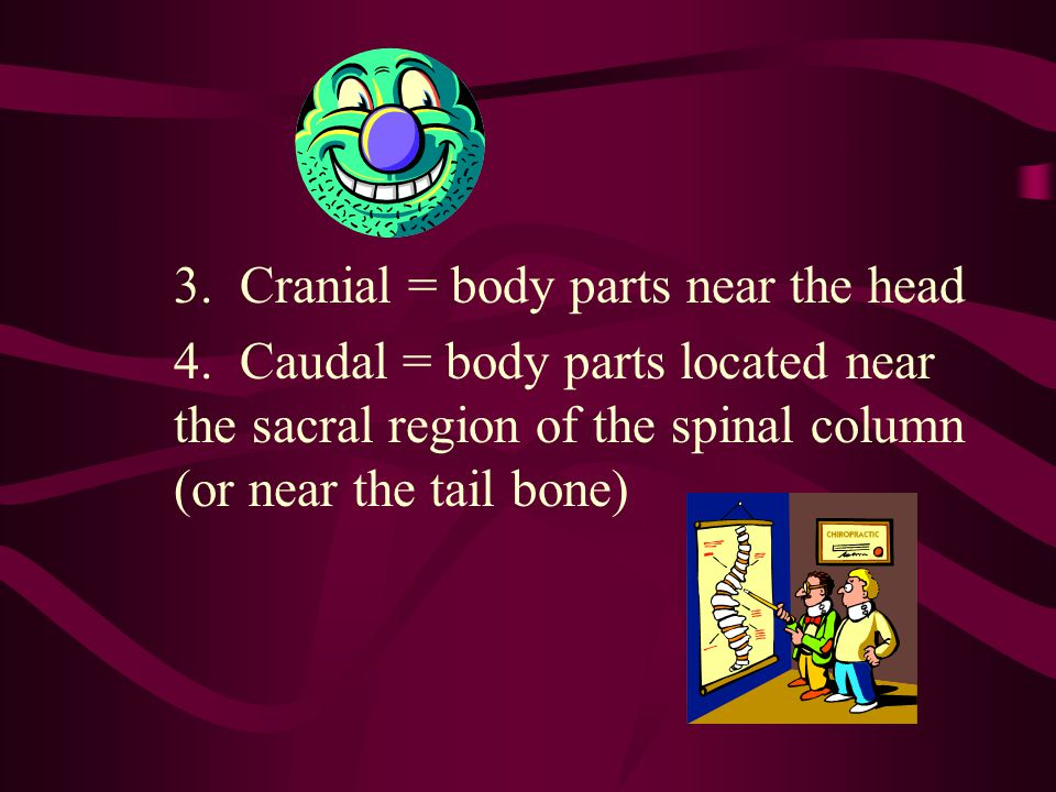 3. Cranial = body parts near the head