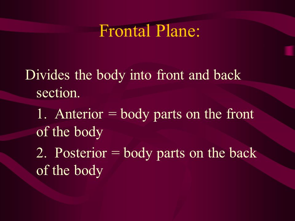 Frontal Plane: Divides the body into front and back section.