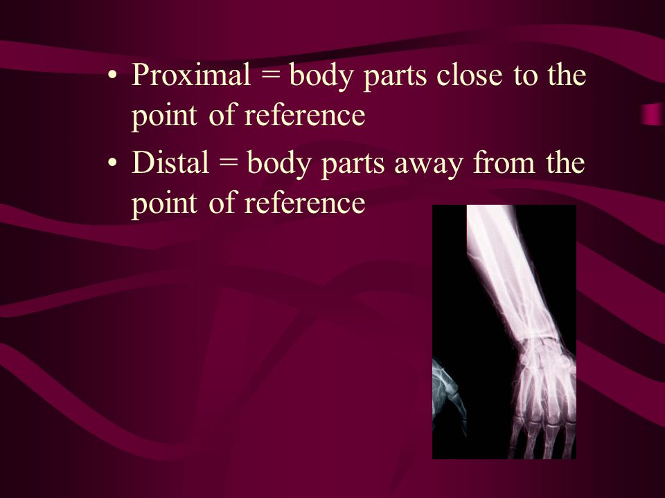 Proximal = body parts close to the point of reference