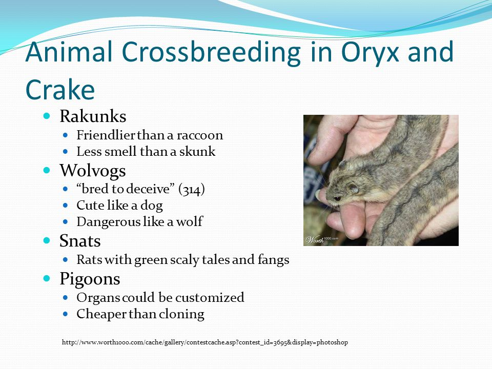 Animal Crossbreeding in Oryx and Crake