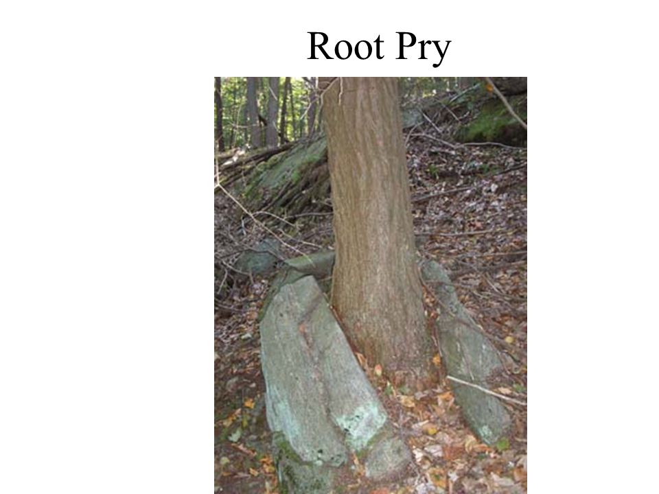 Root Pry
