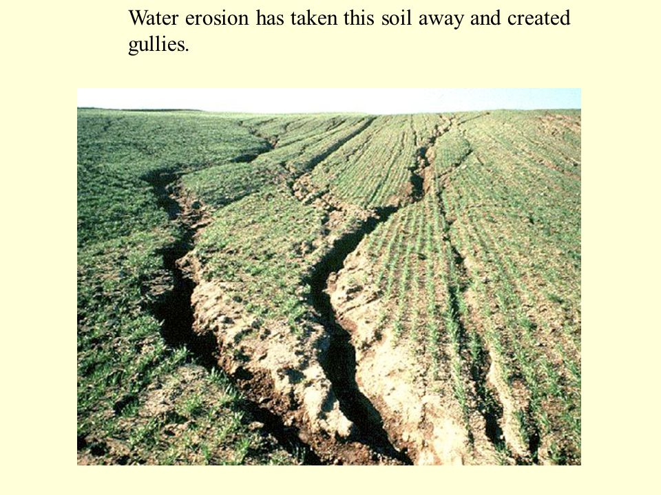 Water erosion has taken this soil away and created gullies.