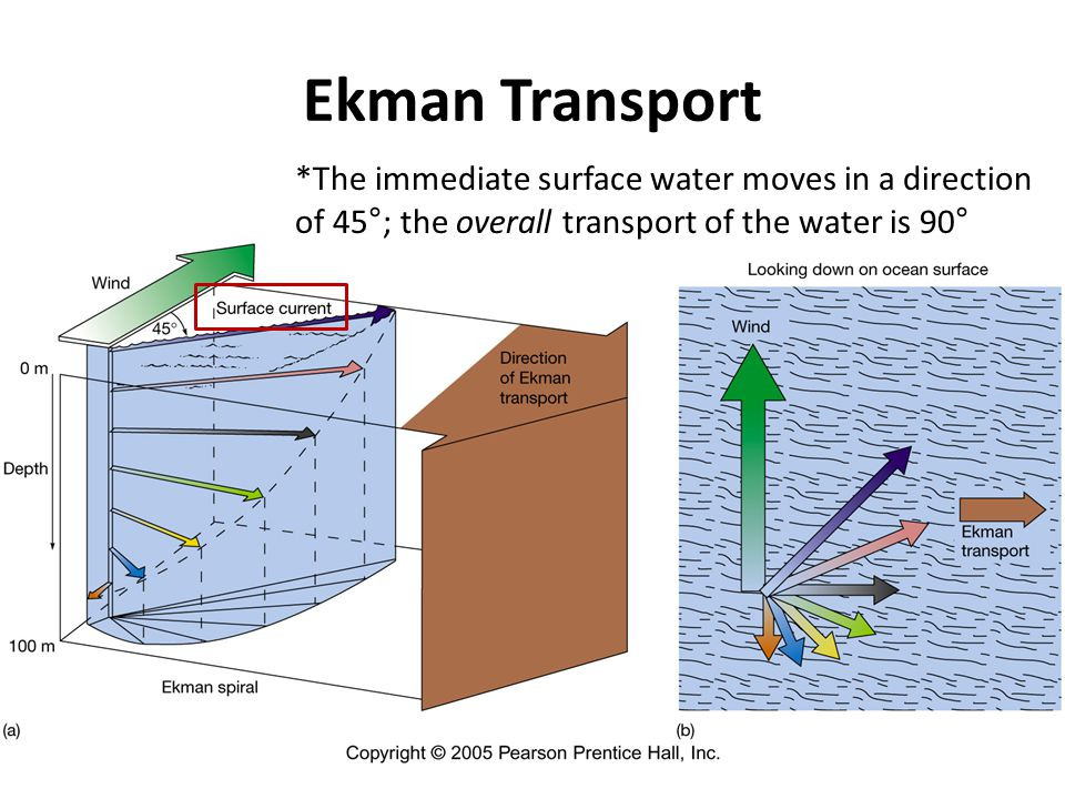 Ekman Transport *The immediate surface water moves in a direction of 45°; the overall transport of the water is 90°