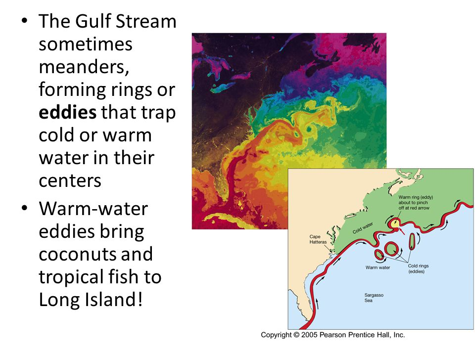 The Gulf Stream sometimes meanders, forming rings or eddies that trap cold or warm water in their centers