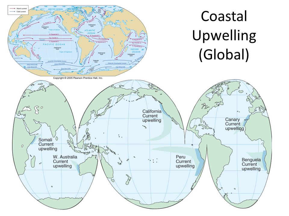 Coastal Upwelling (Global)