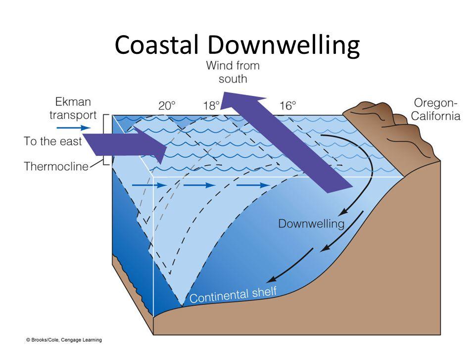 Coastal Downwelling