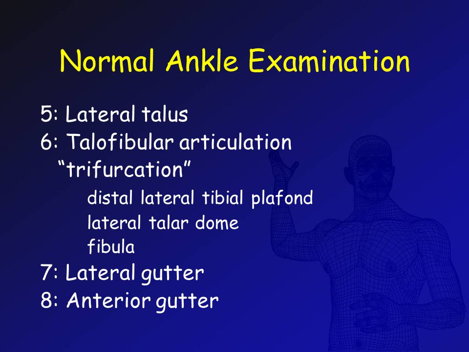 Normal Ankle Examination