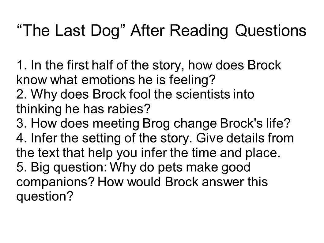 The Last Dog After Reading Questions
