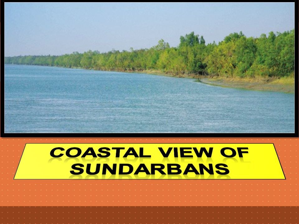Coastal view of Sundarbans