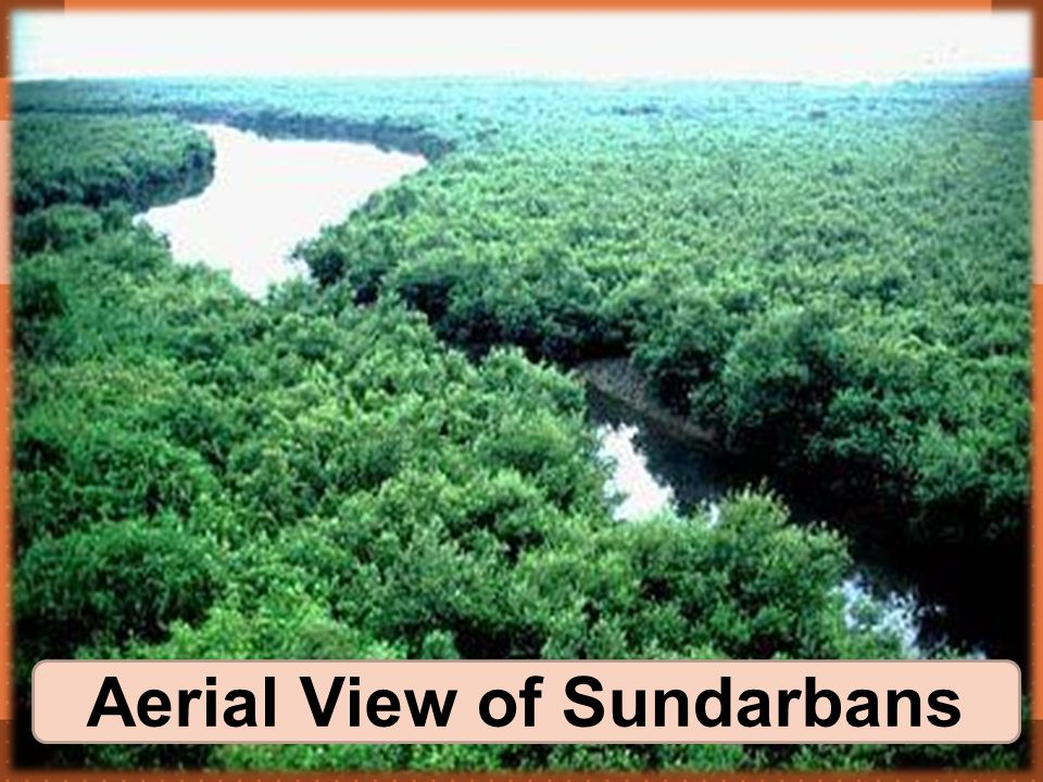 Aerial View of Sundarbans