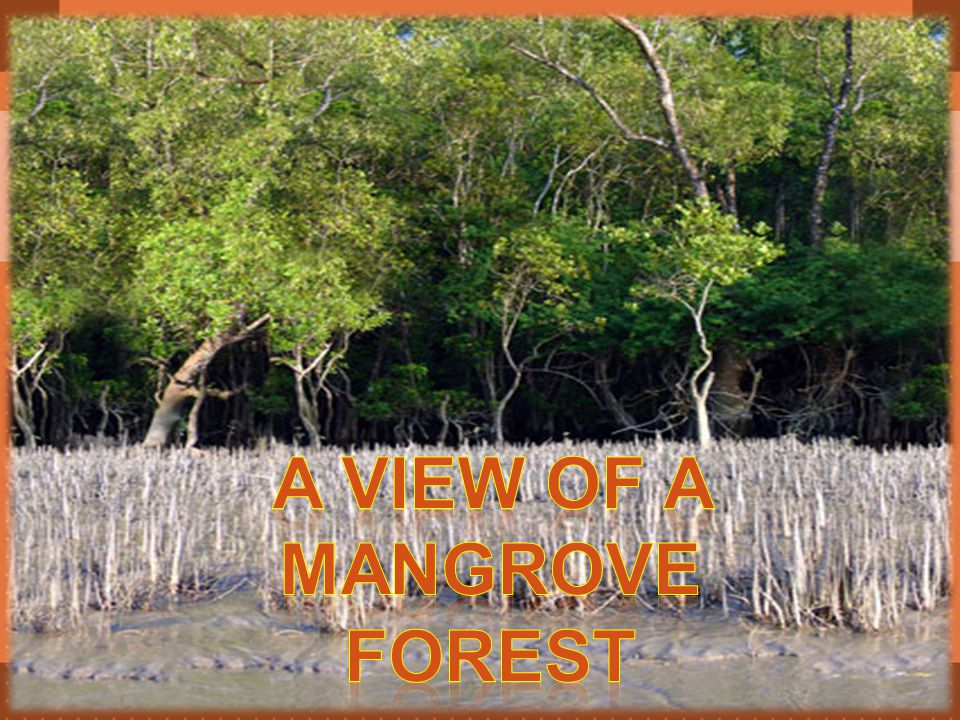 A View of a Mangrove Forest