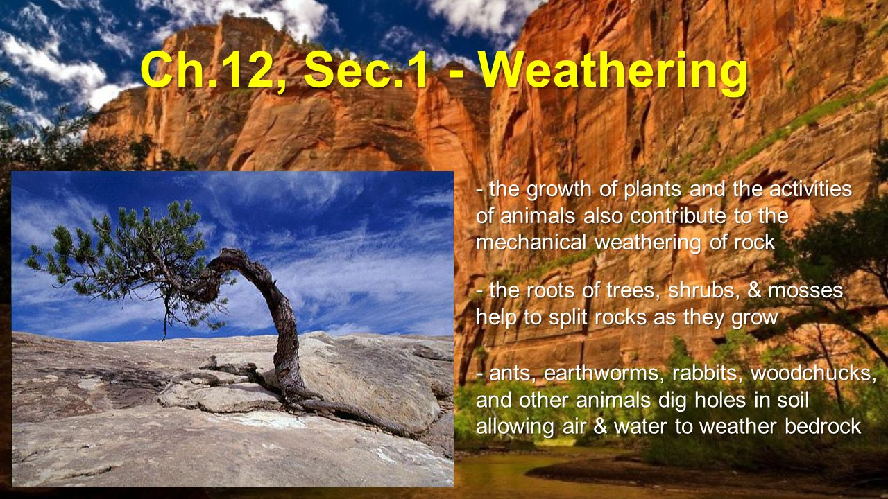 Ch.12, Sec.1 - Weathering - the growth of plants and the activities of animals also contribute to the mechanical weathering of rock.