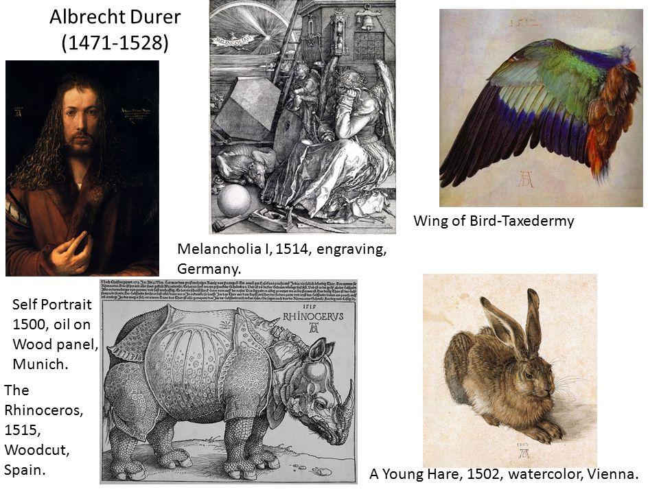 Albrecht Durer (1471-1528) Wing of Bird-Taxedermy