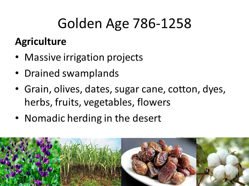 Golden Age 786-1258 Agriculture Massive irrigation projects