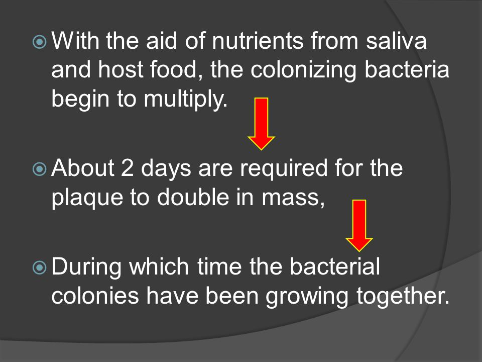 With the aid of nutrients from saliva and host food, the colonizing bacteria begin to multiply.