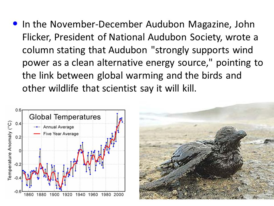 In the November-December Audubon Magazine, John Flicker, President of National Audubon Society, wrote a column stating that Audubon strongly supports wind power as a clean alternative energy source, pointing to the link between global warming and the birds and other wildlife that scientist say it will kill.