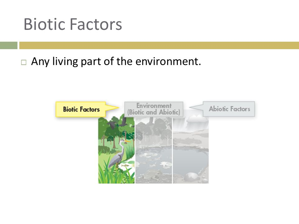 Biotic Factors Any living part of the environment.