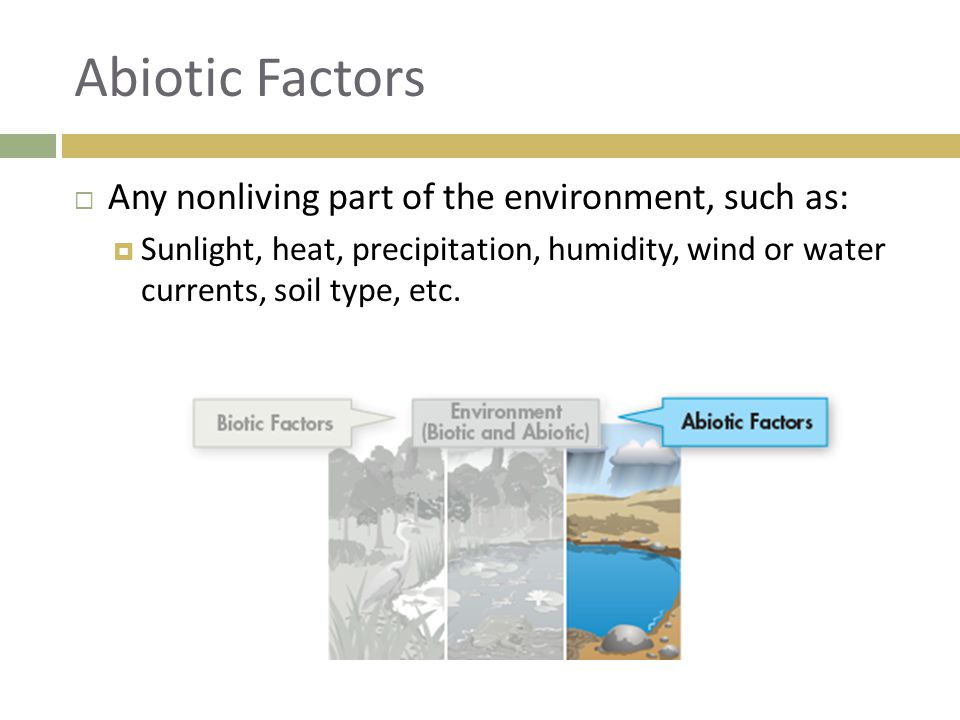Abiotic Factors Any nonliving part of the environment, such as: