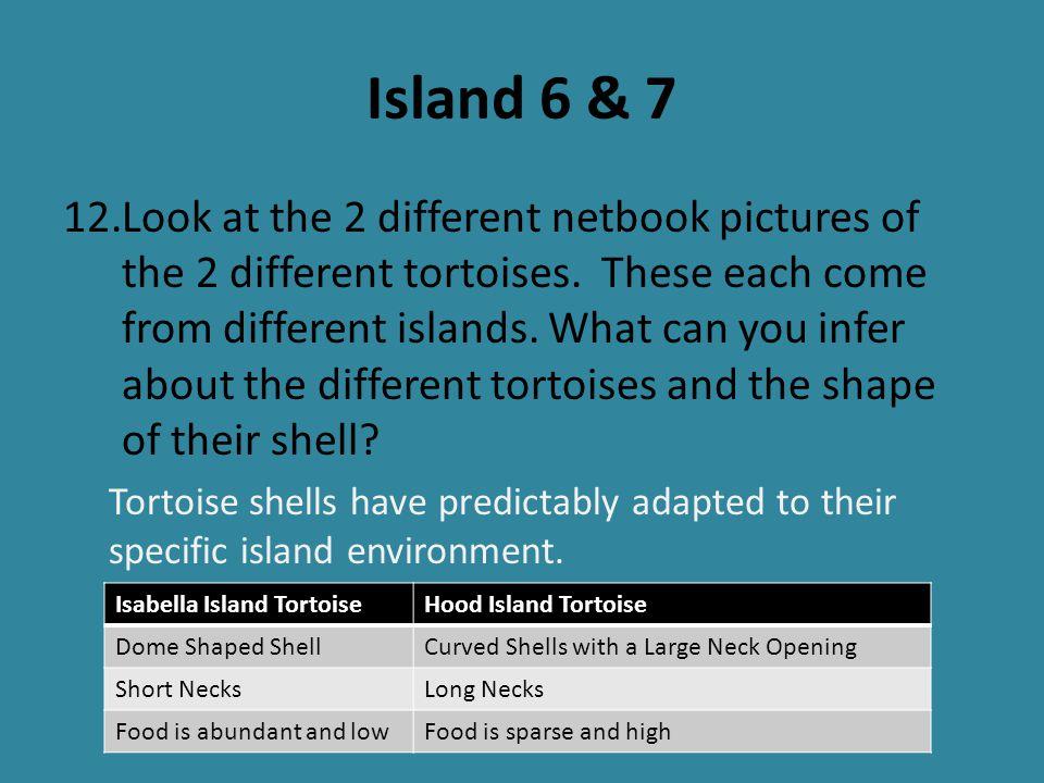 Island 6 & 7