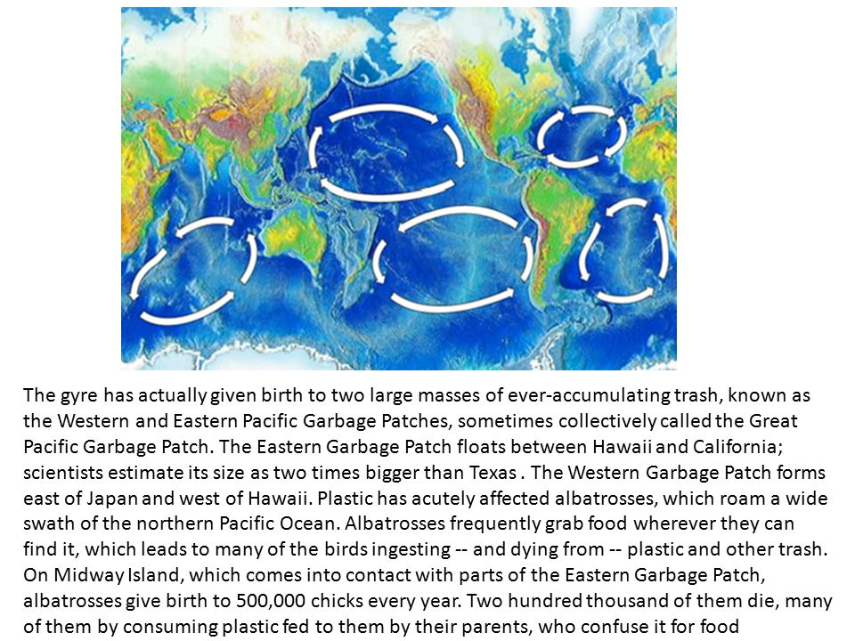 The gyre has actually given birth to two large masses of ever-accumulating trash, known as the Western and Eastern Pacific Garbage Patches, sometimes collectively called the Great Pacific Garbage Patch.