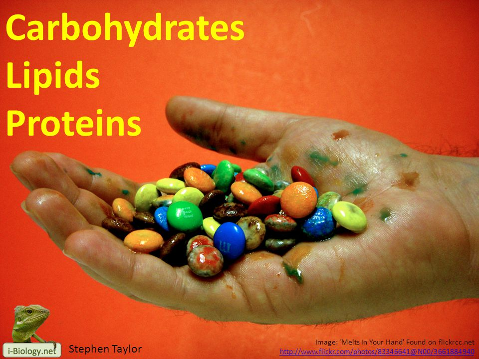 Carbohydrates Lipids Proteins Stephen Taylor