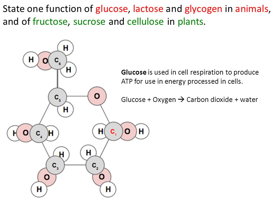 State one function of glucose, lactose and glycogen in animals, and of fructose, sucrose and cellulose in plants.