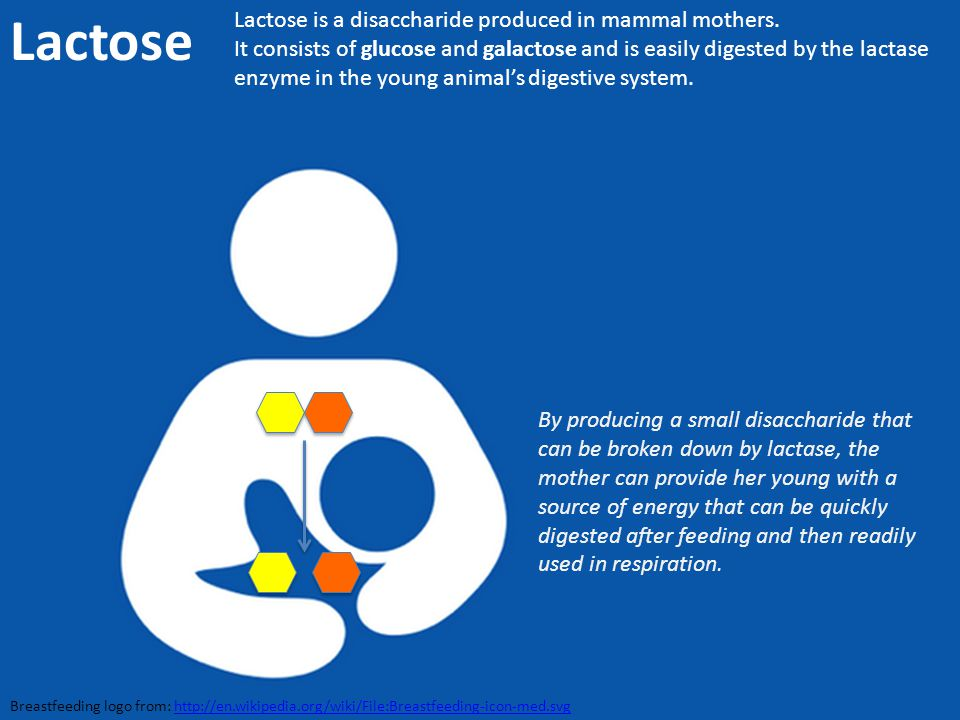 Lactose Lactose is a disaccharide produced in mammal mothers.