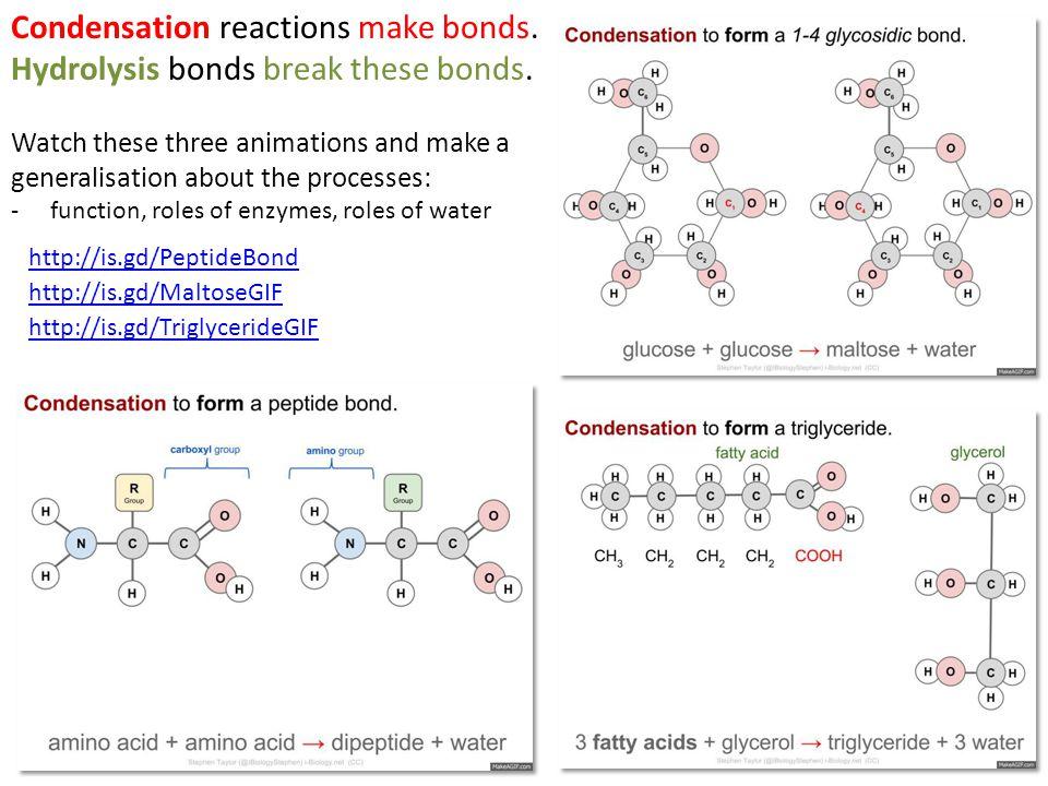 Condensation reactions make bonds. Hydrolysis bonds break these bonds.