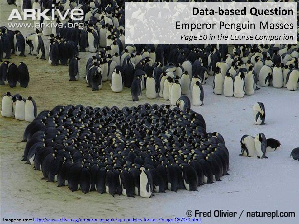 Emperor Penguin Masses