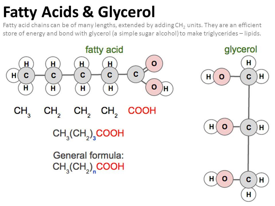 Fatty Acids & Glycerol