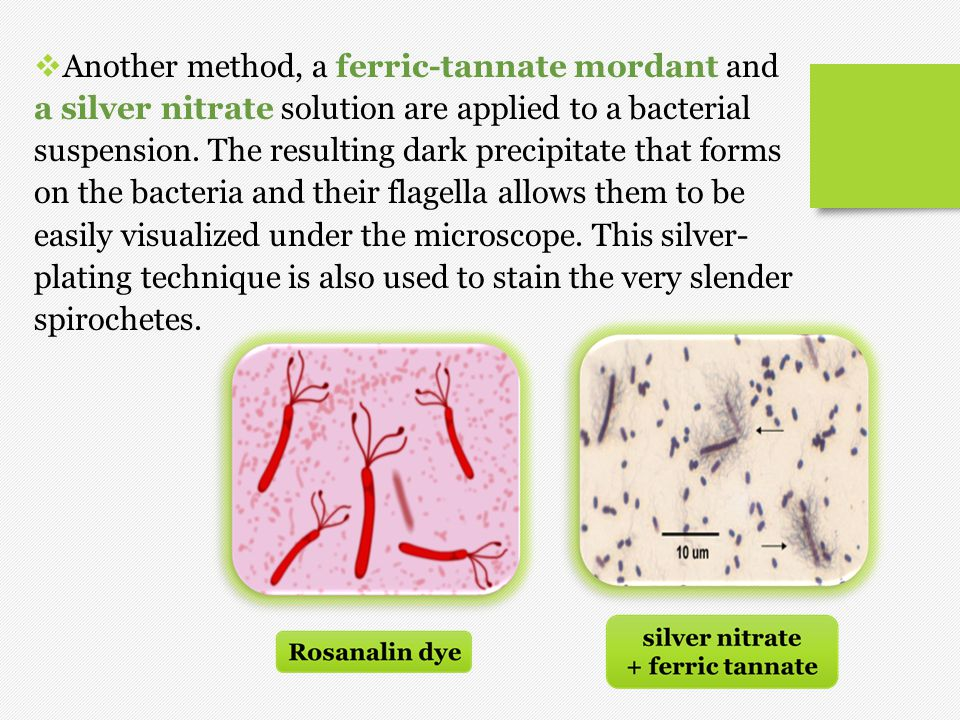Another method, a ferric-tannate mordant and a silver nitrate solution are applied to a bacterial suspension.