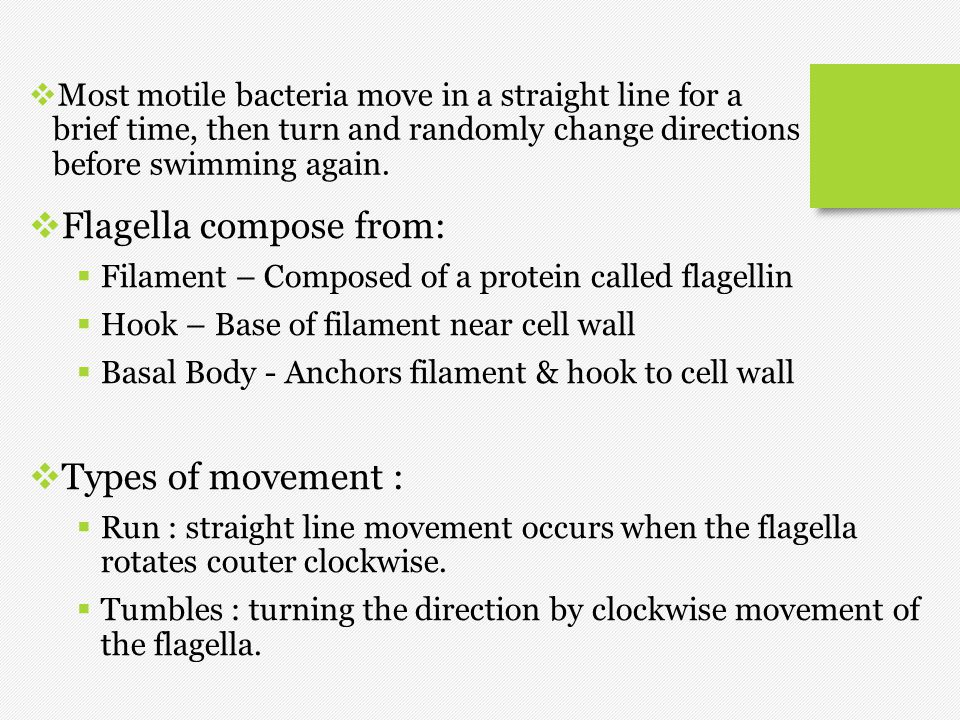 Flagella compose from:
