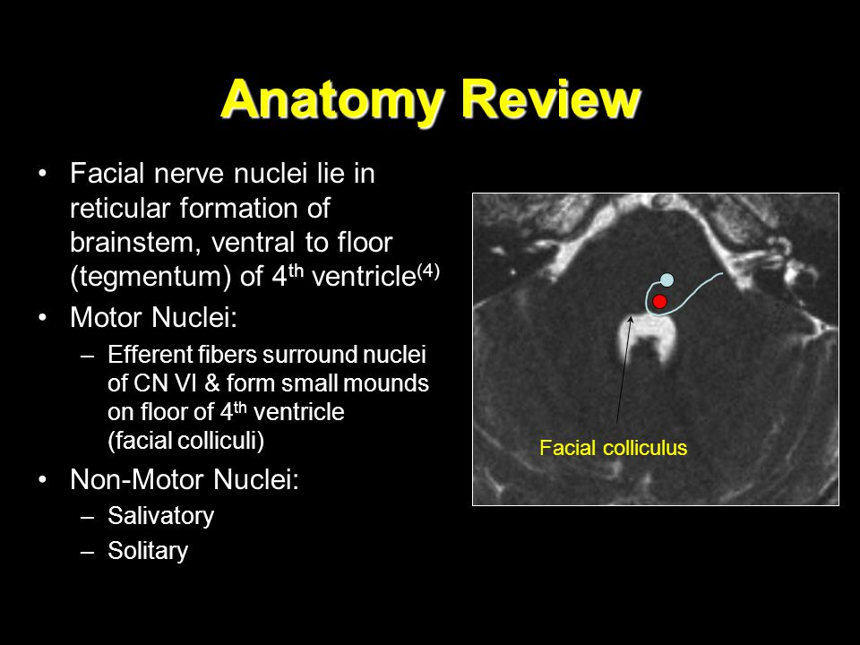 Anatomy Review Facial nerve nuclei lie in reticular formation of brainstem, ventral to floor (tegmentum) of 4th ventricle(4)