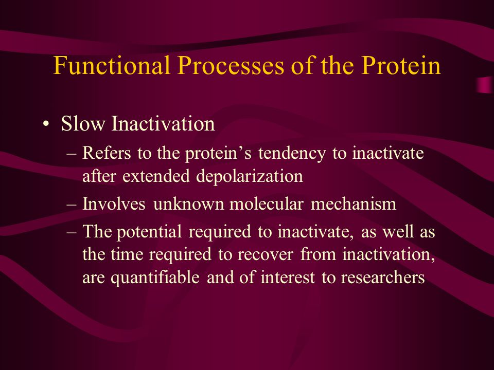 Functional Processes of the Protein