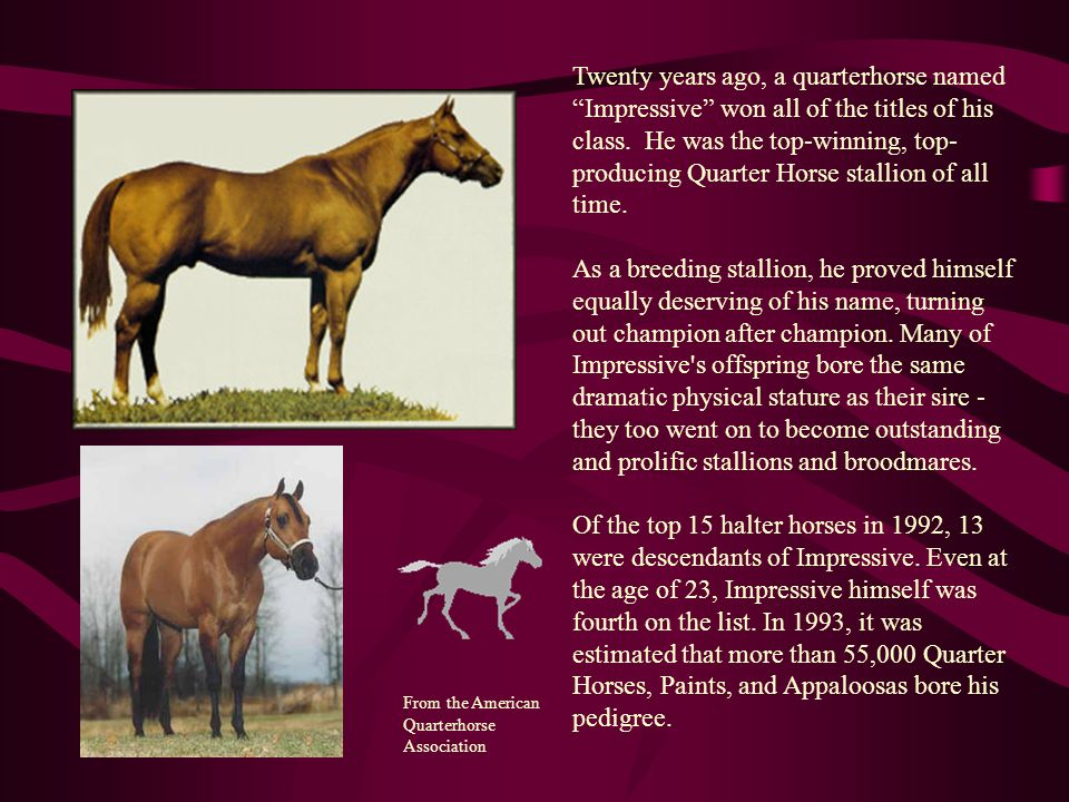 Twenty years ago, a quarterhorse named Impressive won all of the titles of his class. He was the top-winning, top-producing Quarter Horse stallion of all time.