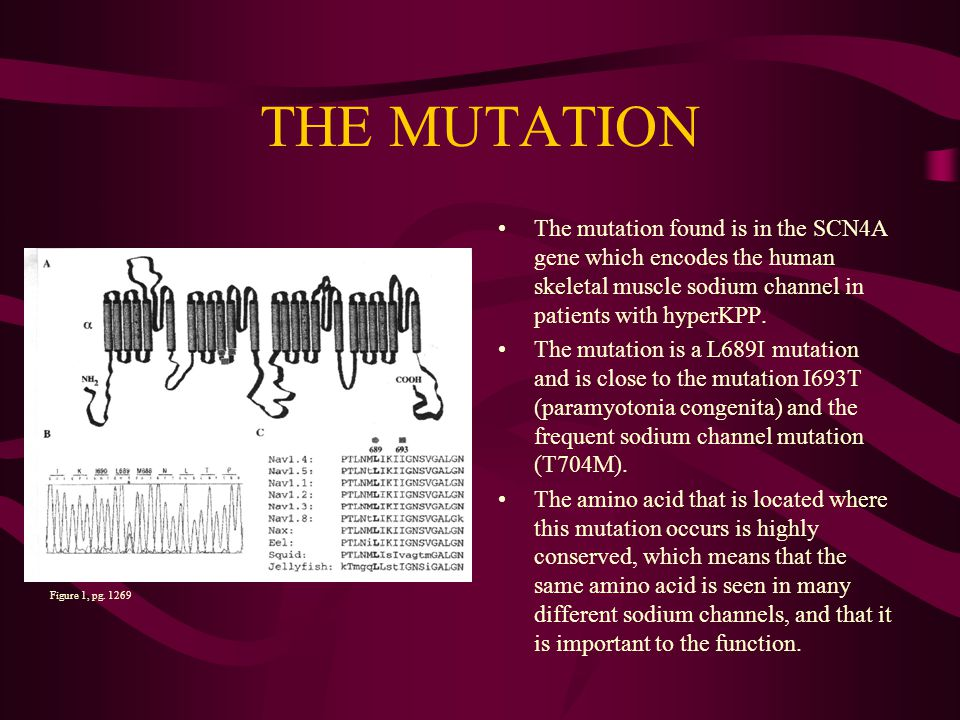 THE MUTATION The mutation found is in the SCN4A gene which encodes the human skeletal muscle sodium channel in patients with hyperKPP.
