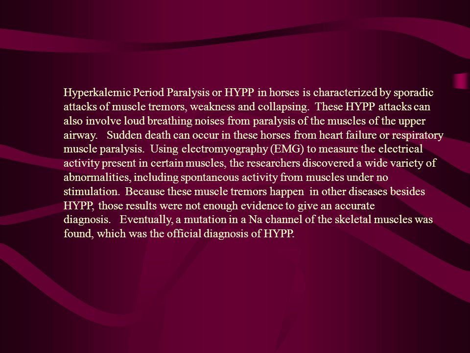 Hyperkalemic Period Paralysis or HYPP in horses is characterized by sporadic attacks of muscle tremors, weakness and collapsing. These HYPP attacks can also involve loud breathing noises from paralysis of the muscles of the upper airway. Sudden death can occur in these horses from heart failure or respiratory muscle paralysis. Using electromyography (EMG) to measure the electrical activity present in certain muscles, the researchers discovered a wide variety of abnormalities, including spontaneous activity from muscles under no stimulation. Because these muscle tremors happen in other diseases besides HYPP, those results were not enough evidence to give an accurate diagnosis. Eventually, a mutation in a Na channel of the skeletal muscles was found, which was the official diagnosis of HYPP.