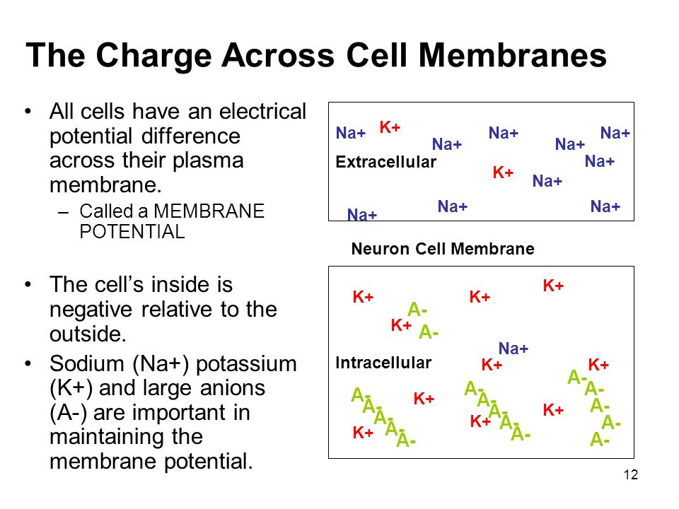 The Charge Across Cell Membranes