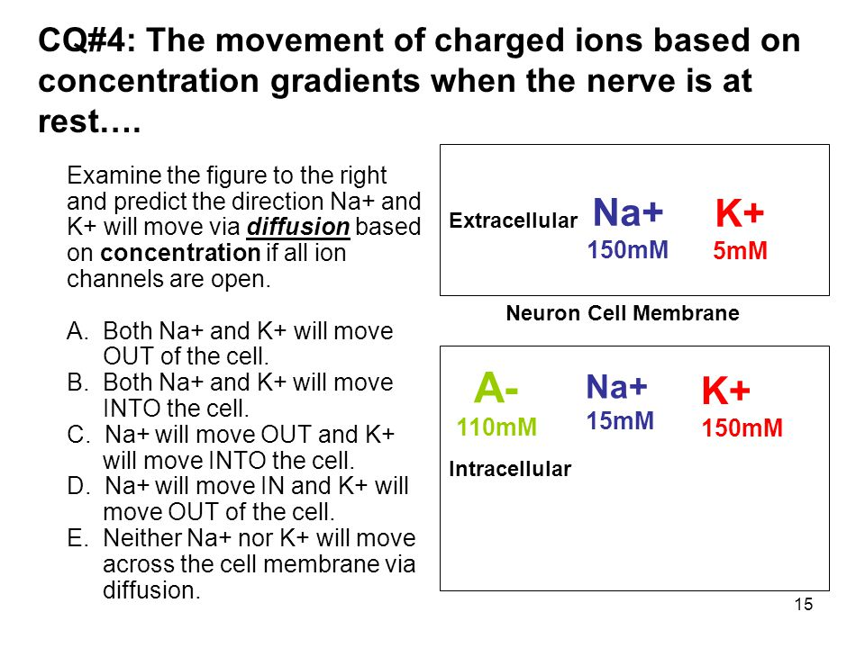 CQ#4: The movement of charged ions based on concentration gradients when the nerve is at rest….