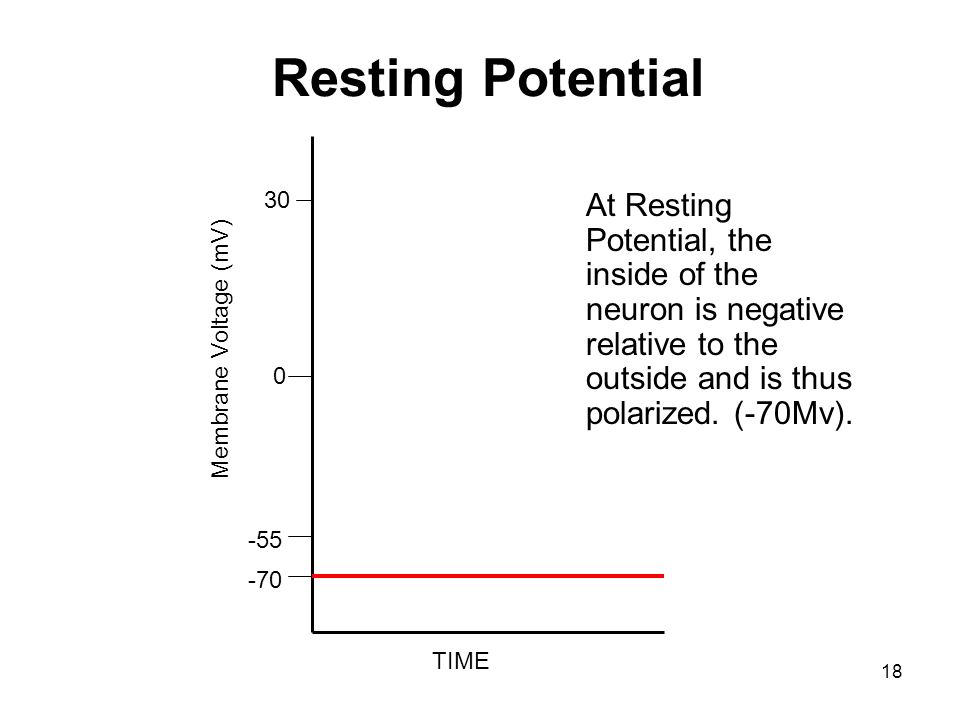 Resting Potential TIME. Membrane Voltage (mV) -70. -55. 30.