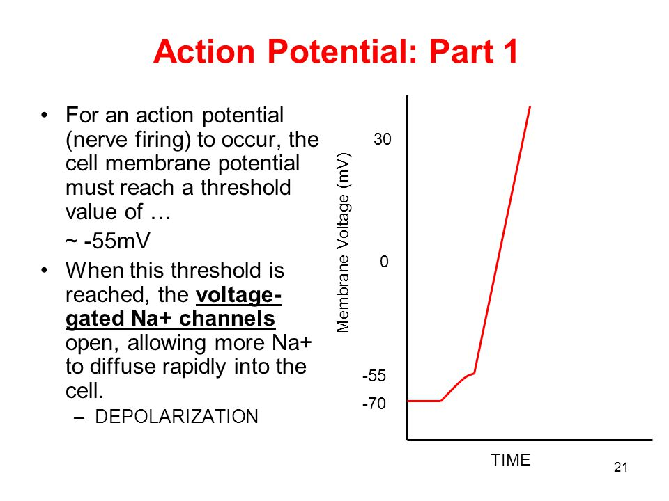 Action Potential: Part 1